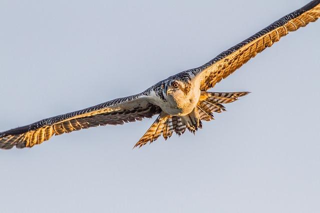 Launch_bird.jpg